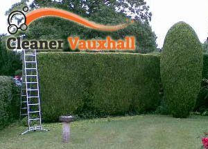 Hedge Maintenance SW8